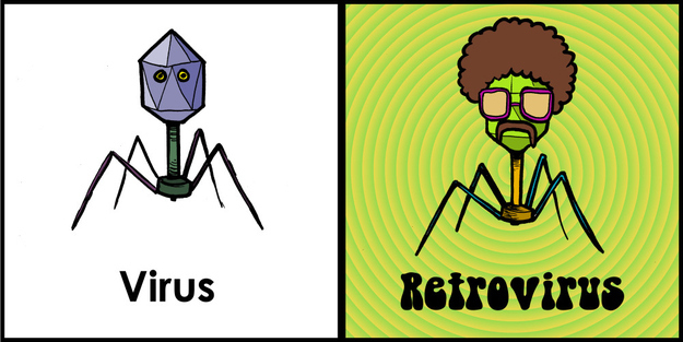 2. The difference between a virus and a retrovirus