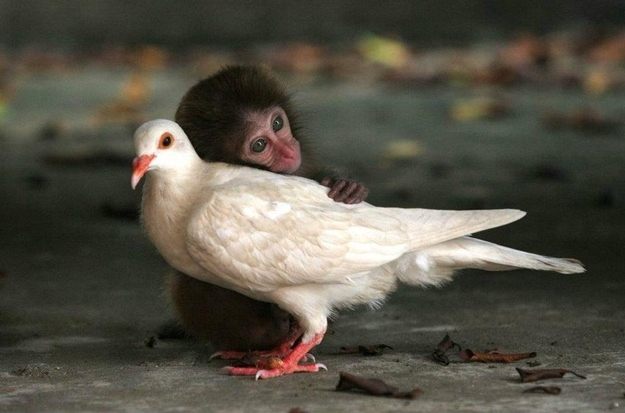 In closing, pigeons are the best. Even this baby monkey thinks so