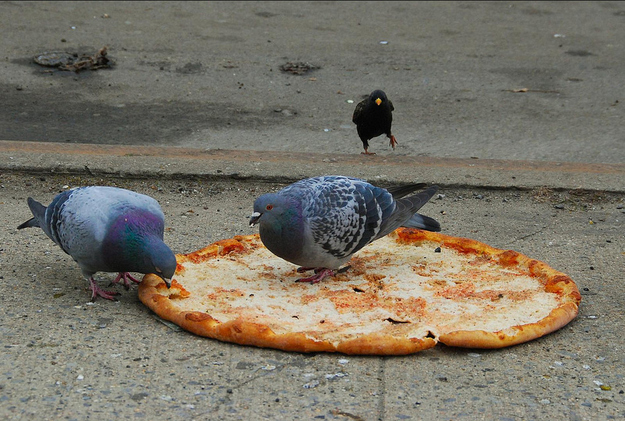 They love pizza