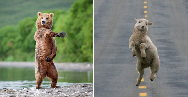 Animals That Will Show You What The Real Dance Moves Are  C B Funny Pictures