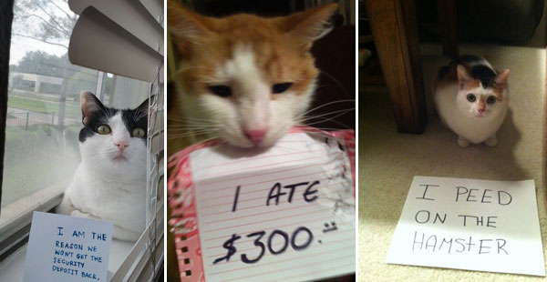 25 Adorable Photos of Guilty Cats  #7 Just Made My Day!