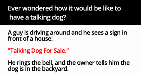 Ever wondered how it would be like to have a talking dog? Read below to uncover the mystery.