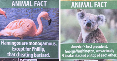 Guy Leaves Fake Animal Facts All Over Los Angeles Zoo LOL
