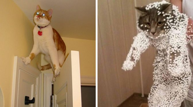 15+ Cats Who Tried So Hard But Failed In The Most Hilarious Way, LOL