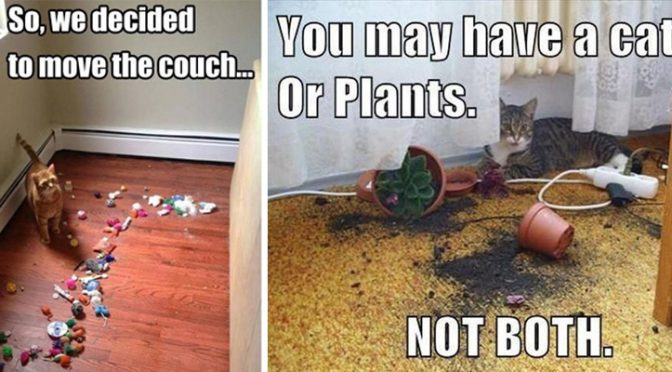 25+ hilarious struggles only cat owners will understand. The #19 really made my day LOL!
