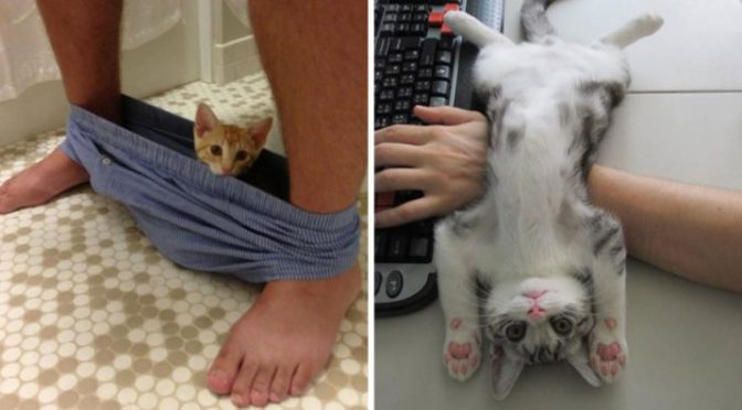 16+ Cats Who Couldn't Care Less About Your Personal Space. #10 is Freaking Awesome