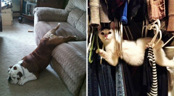 The 20+ Hilarious photos of cats and dogs struggling against human furniture. #9 made me laugh hard!