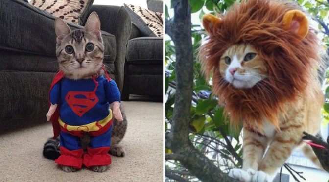 20+ Funny Halloween Costumes For Cats. #12 Is The Best Ever.
