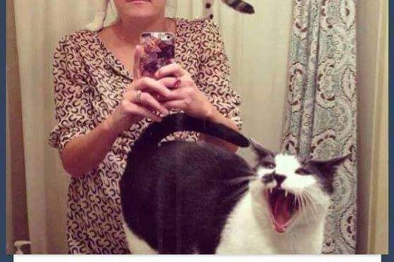 18+ Cat pictures which shows cats needs personal space too