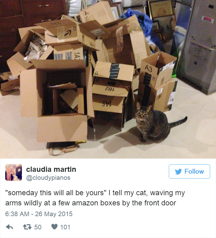 Funny Tweets About Cats Page Of - 16 funniest cat tweets 2016