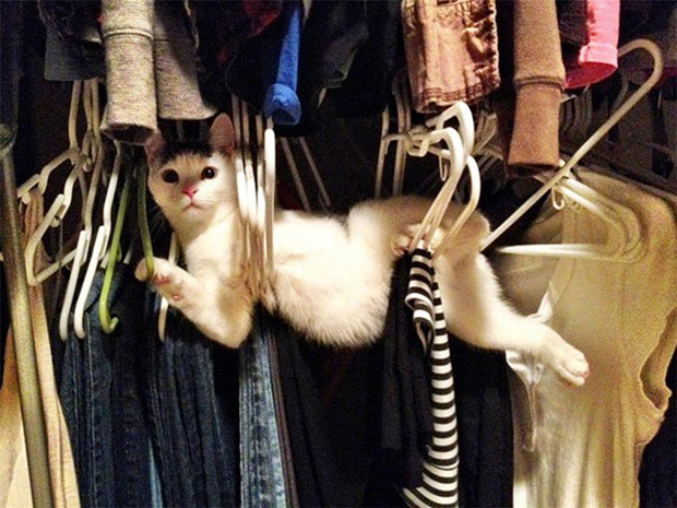 Cats Who Tried So Hard But Failed In The Most Hilarious Way - Cats who tried so hard but failed in the most hilarious ways