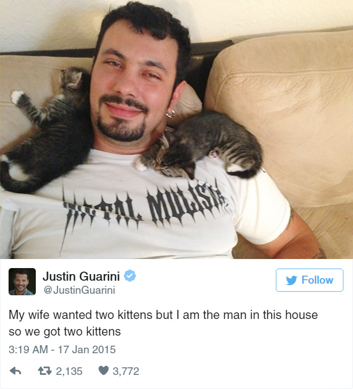 Funny Tweets About Cats - 16 funniest cat tweets 2016