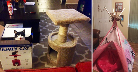 17+ Pics Of Cats Using Your Carefully Chosen Gifts