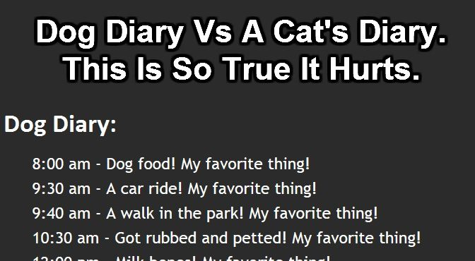 The Best Diary Comparison Ever. Who Ever Said Cats Are Evil?
