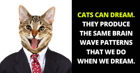 20+ Interesting Facts about Cats You Probably Don't know