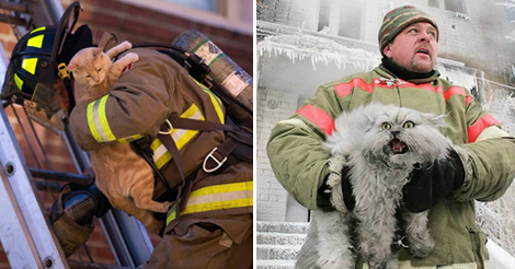 12+ Brave Firefighters who Risked Their Lives to Rescue Cats
