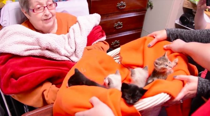 Hospice Resident, Whose Only Wish Is to Snuggle Kittens, Gets Her Wish Granted