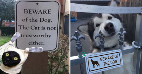 "25+ Dangerous Dogs and Cats Behind ""Beware"" Signs"