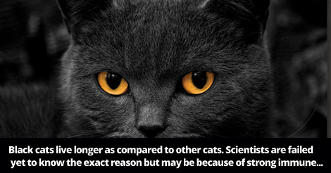 12+ Reasons Why You Should Own a Black Cat