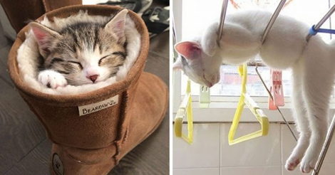 25 Most Adorable Sleeping Postures of Cat