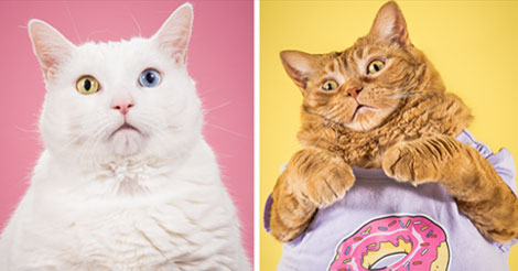 I Photograph 15+ Adorable Fat Cats (Cats are so full of cuteness)