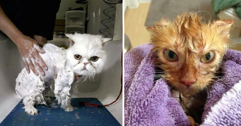 10+ Cats Who Battled The Bathtub And Lost