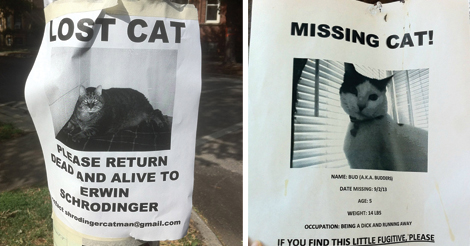 21 most weird and funny missing cats signs