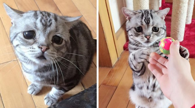 Meet Luhu, The Most Adorable and Innocent Cat with Sad expressions (12 Photos)