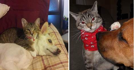 These 15+ Cats Will Show You Who The Real Boss Is