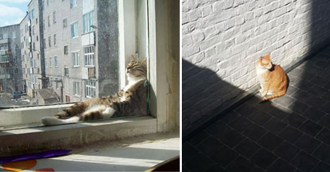 15+ Cats enjoying warmth and Sunbath